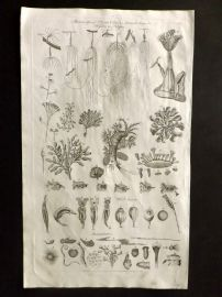 Hall 1791 Antique Print. Microscopical Objects. Animal Subjects, Hydra, Polypes